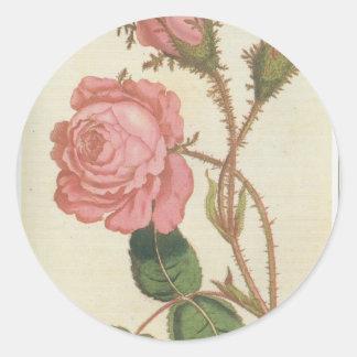 Rosa Cenifolia Muscosa Round Sticker