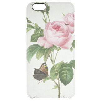 Rosa Centifolia Clear iPhone 6 Plus Case