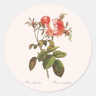 Rosa Centifolia Foliacea Round Sticker