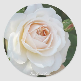 Rosa English Garden Round Sticker