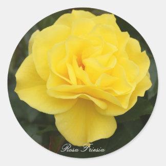 Rosa Friesia Round Sticker