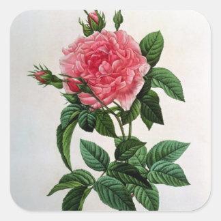 Rosa Gallica Regallis Square Sticker