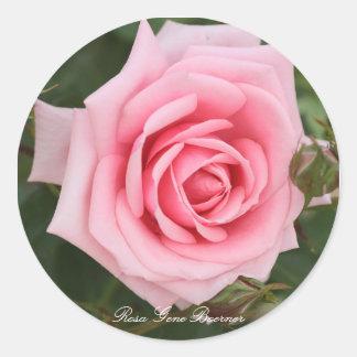 Rosa Gene Boerner Classic Round Sticker