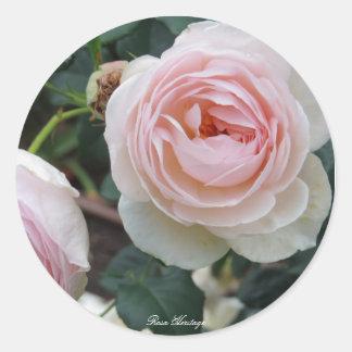 Rosa Heritage Round Sticker