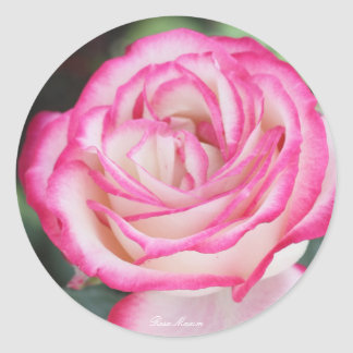 Rosa Maxim Round Sticker