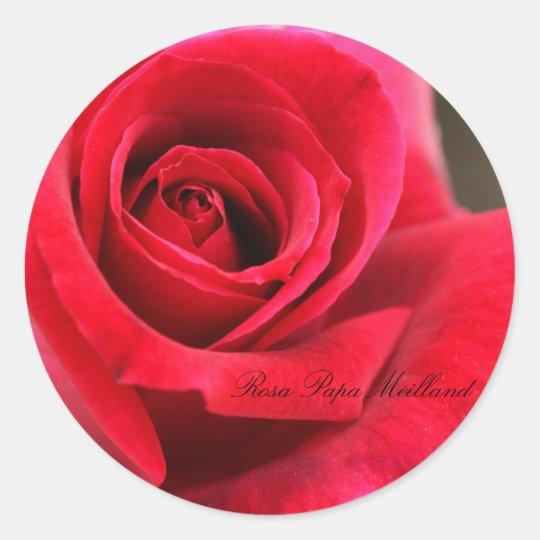 Rosa Papa Meilland Classic Round Sticker