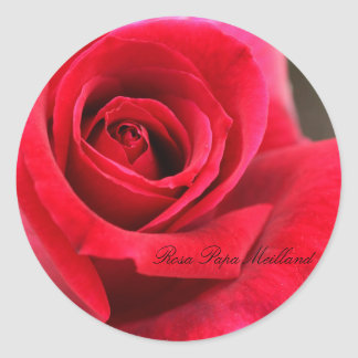 Rosa Papa Meilland Round Sticker
