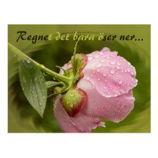 Rosa pion med glittrande vattendroppar CC0516 Postcard