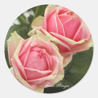 Rosa Pitaya Round Sticker