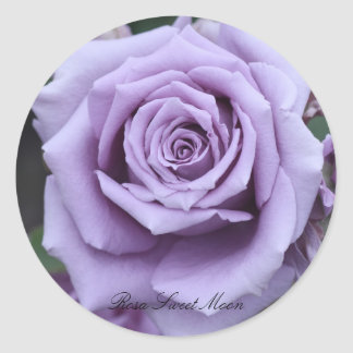 Rosa Sweet Moon Classic Round Sticker