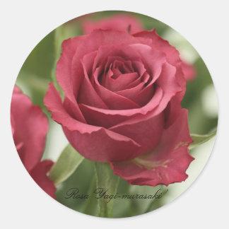 Rosa ` Yagi-murasaki' Round Sticker