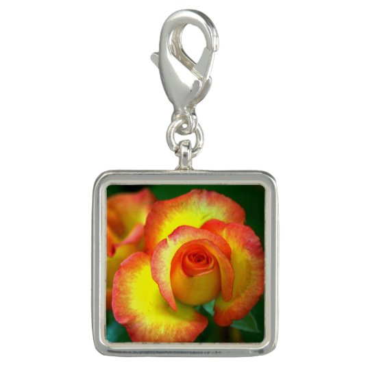 Rose_2015_0413 Photo Charms
