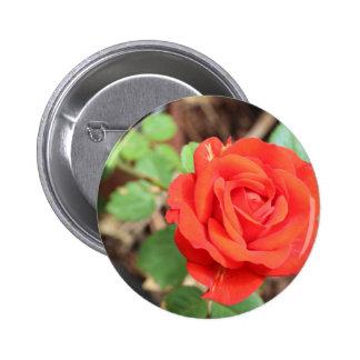 rose 2 inch round button
