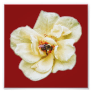 Rose and Bee Photo Print