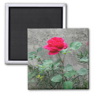 Rose and Stone Magnet