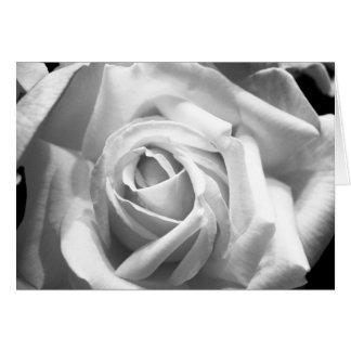 Rose B/W Card