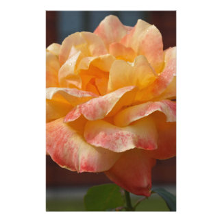 Rose Beauty Customized Stationery