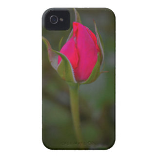 Rose Bloom iPhone 4 Cover