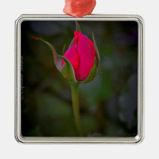 Rose Bloom Silver-Colored Square Ornament