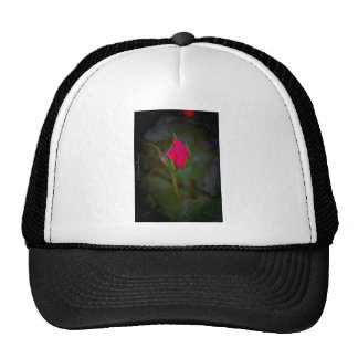 Rose Bloom Trucker Hat