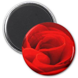 Rose Blossom Magnet Fridge Magnets