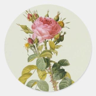 Rose Botanical Print - 'Rosa Bifera' by  Redoute Round Sticker