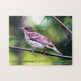 Rose Breasted Grosbeak Puzzle
