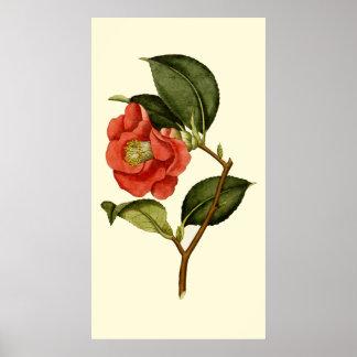 Rose Camellia Poster