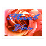 Rose Canterbury 4 Thank You 1 The MUSEUM Zazzle Gi Post Card
