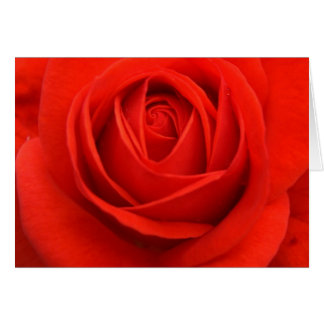 Rose cards, Red Card