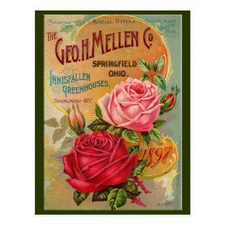 Rose Catalogue Postcard