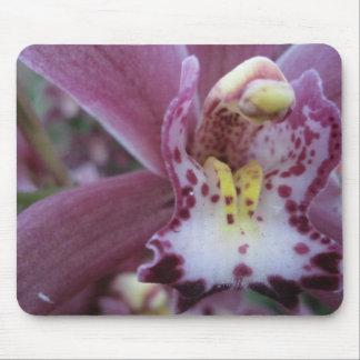 Rose Cymbidium Orchid Mousepad