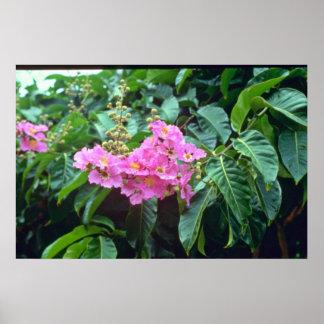 Rose de Speciosa de Lagerstroemia (la crêpe le Myr Posters
