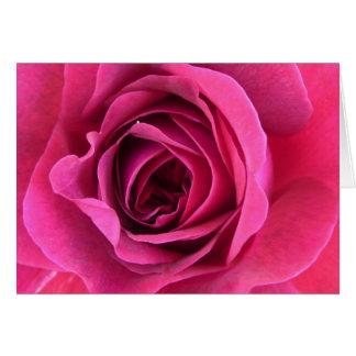 Rose dream in pink card