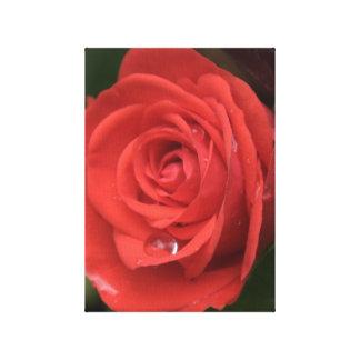 Rose Drop Canvas Print