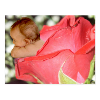 Rose Flower Baby Postcard