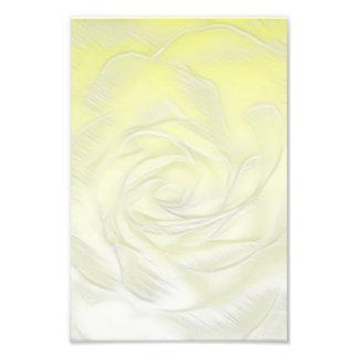 Rose Flower Close-up Photo Print