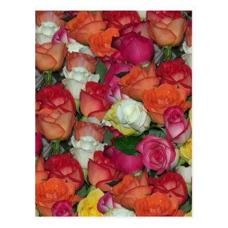 rose galore postcard