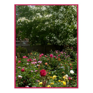 Rose Garden Dogwood Postcard