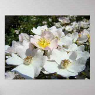 Rose Garden Floral Landscape art prints Summer Poster