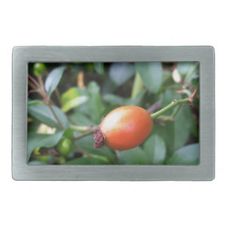 Rose hip ripen rectangular belt buckle