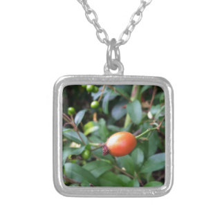Rose hip ripen silver plated necklace