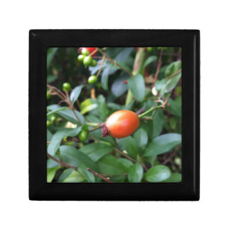 Rose hip ripen trinket box