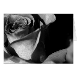 Rose in Black and White Card
