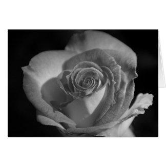 Rose in Black & White Card