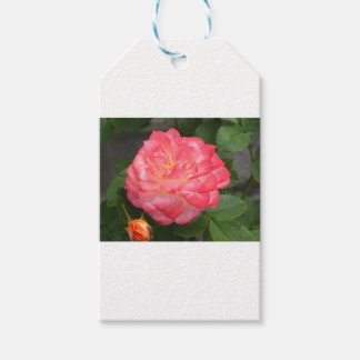 Rose in bloom gift tags