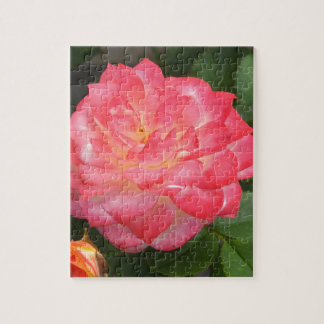 Rose in bloom jigsaw puzzle