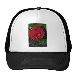 Rose in Deep Red Trucker Hat