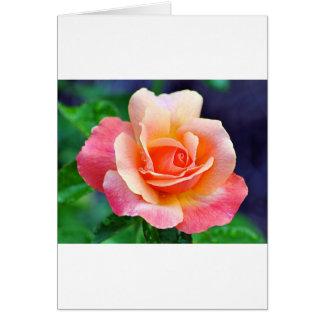 Rose in Full Bloom Card
