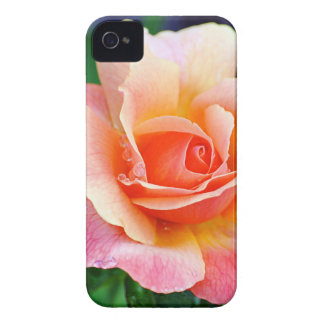 Rose in Full Bloom iPhone 4 Cover